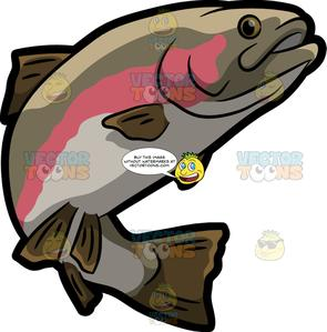 Trout clipart fish gill. A rainbow