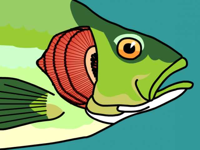 Free download clip art. Trout clipart fish gill