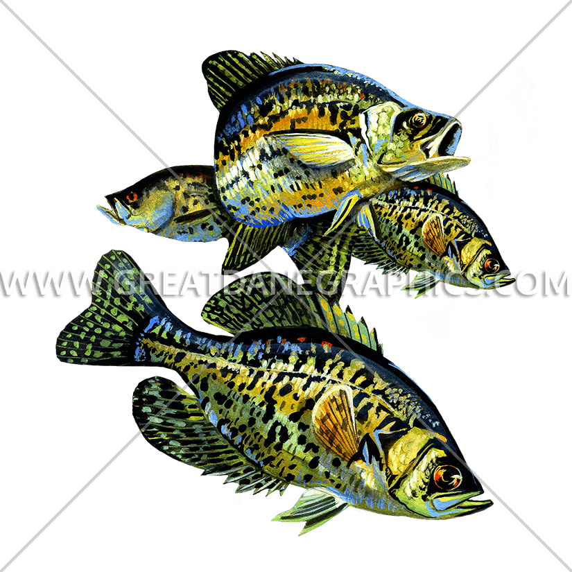 Trout clipart freshwater animal. Crappies production ready artwork