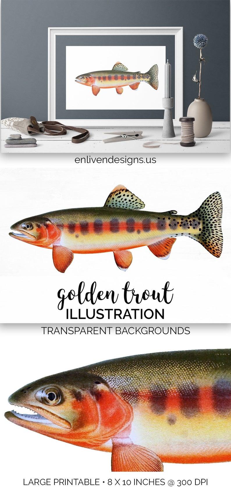 Fish instant digital download. Trout clipart golden trout