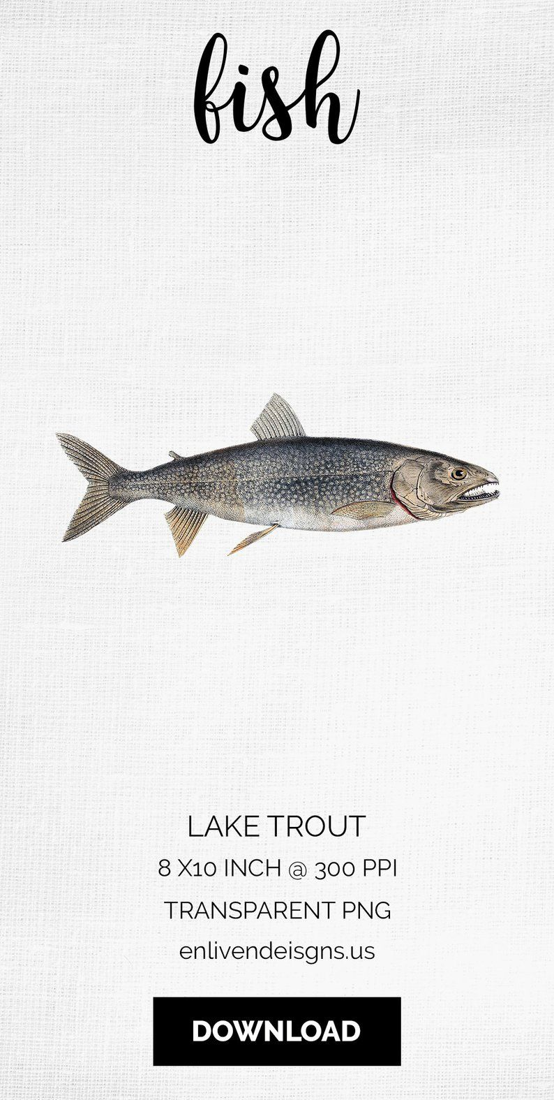 Fish instant digital download. Trout clipart lake trout