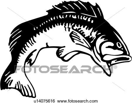 Trout clipart largemouth bass. Free download best