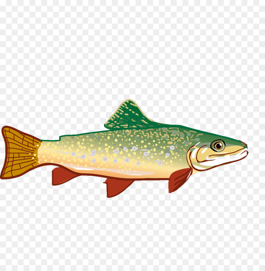 Trout clipart rainbiw. Rainbow drawing png download