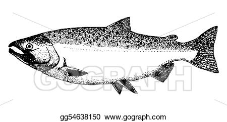 Stock illustration or coho. Trout clipart silver fish