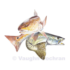 Free images at clker. Trout clipart speckled trout