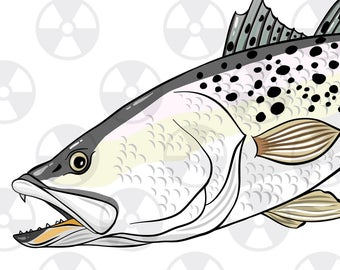 Etsy . Trout clipart speckled trout