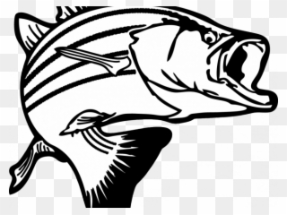 Png download . Trout clipart spotted bass