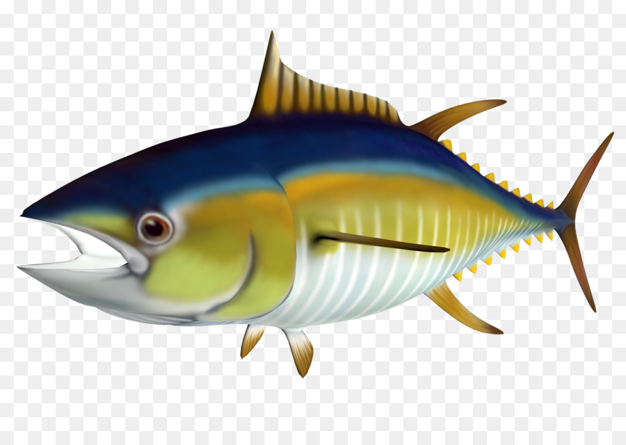 Atlantic bluefin yellowfin clip. Tuna clipart