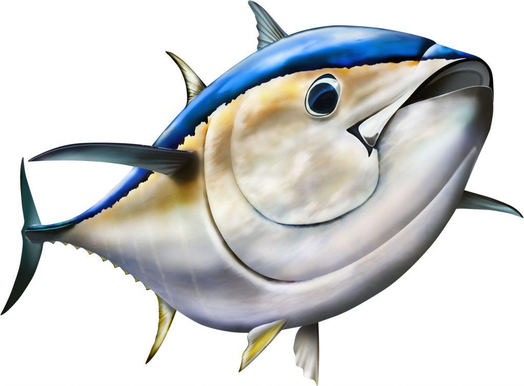 Tuna clipart. Bluefin tunaspirit graphix spirit