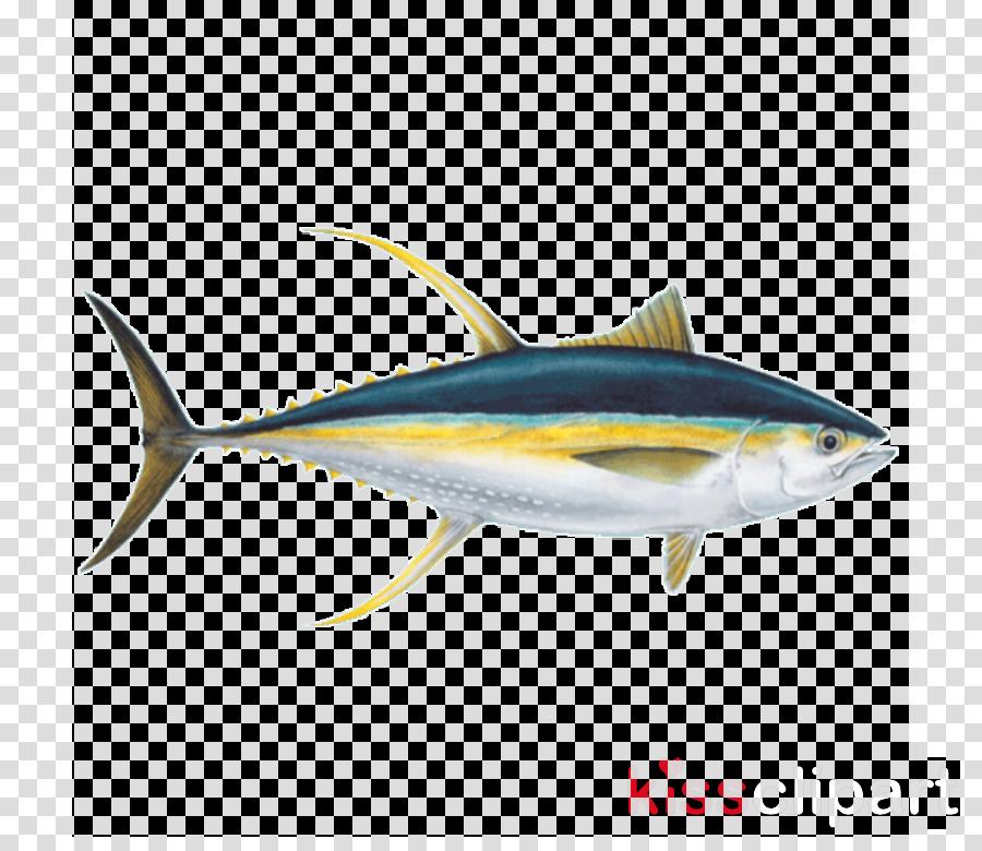 Tuna clipart amberjack. Fish fin atlantic bluefin