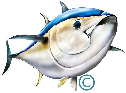 Illustration photoshop http www. Tuna clipart bluefin tuna