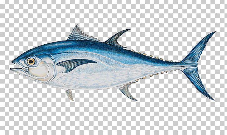 Tuna clipart bluefin tuna. Atlantic yellowfin big game