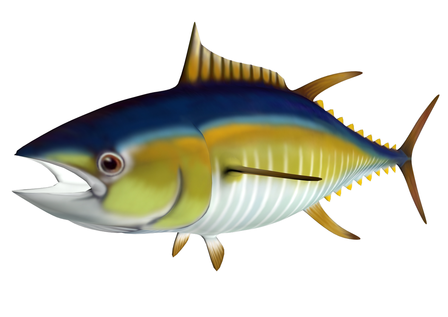 Tuna Clipart Canned Tuna Free collection | Download and share Tuna ...