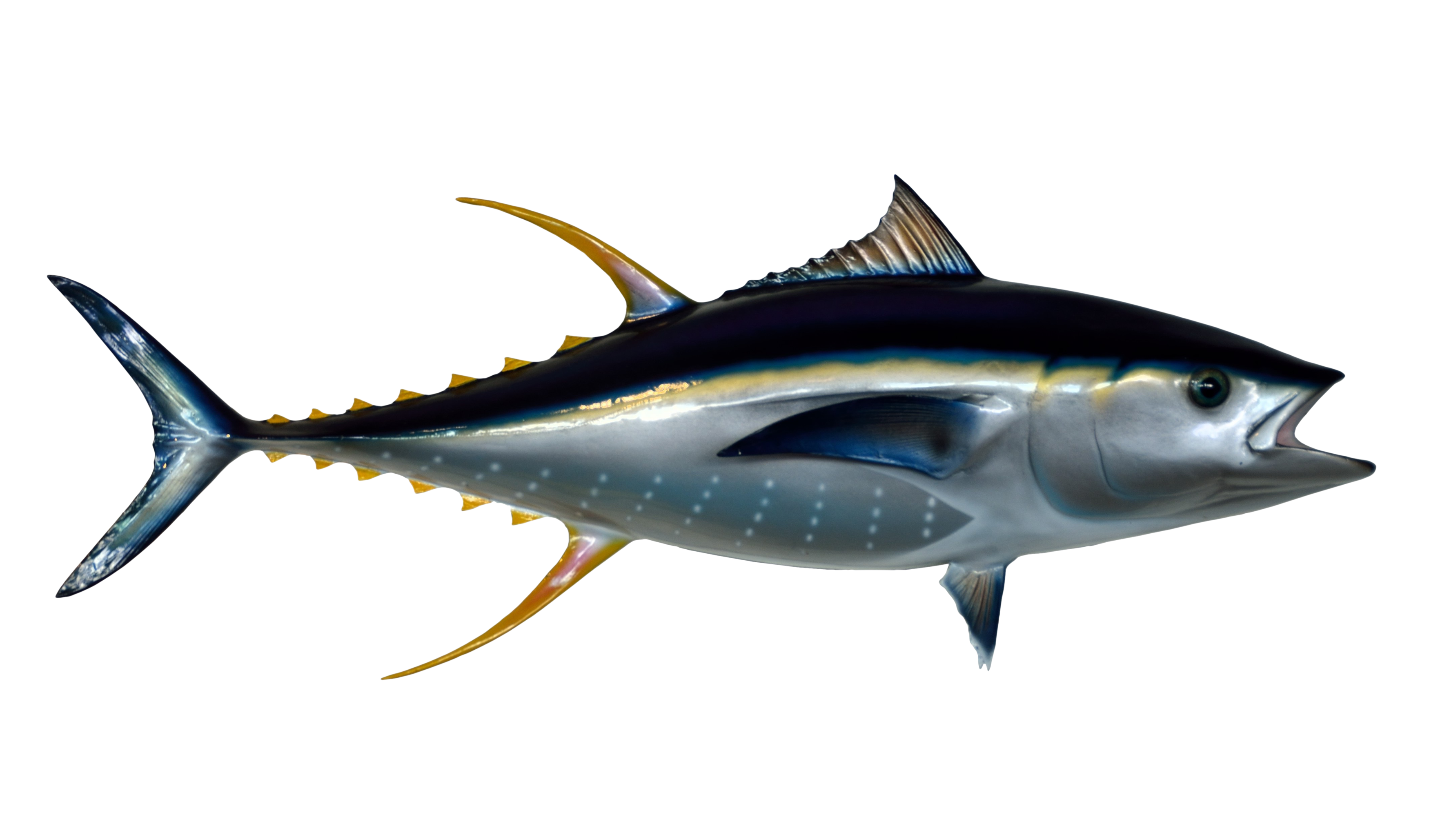 Png transparent images pluspng. Tuna clipart charlie