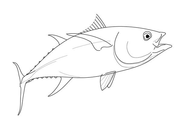 Tuna clipart drawn. Drawing of a yellowfin