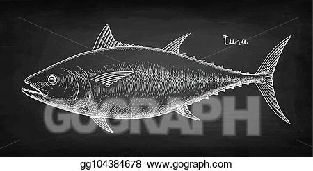 Vector art chalk sketch. Tuna clipart drawn