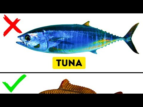 Tuna clipart edible fish.  kinds of you