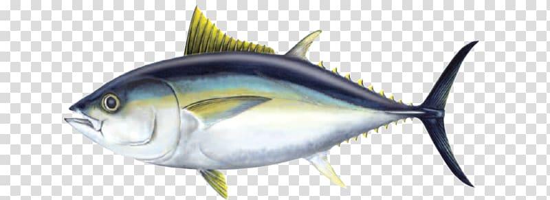Bigeye atlantic bluefin yellowfin. Tuna clipart fish meat