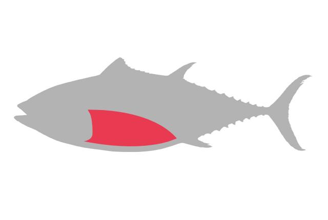 Bluefin balfeg sustainable . Tuna clipart fish protein