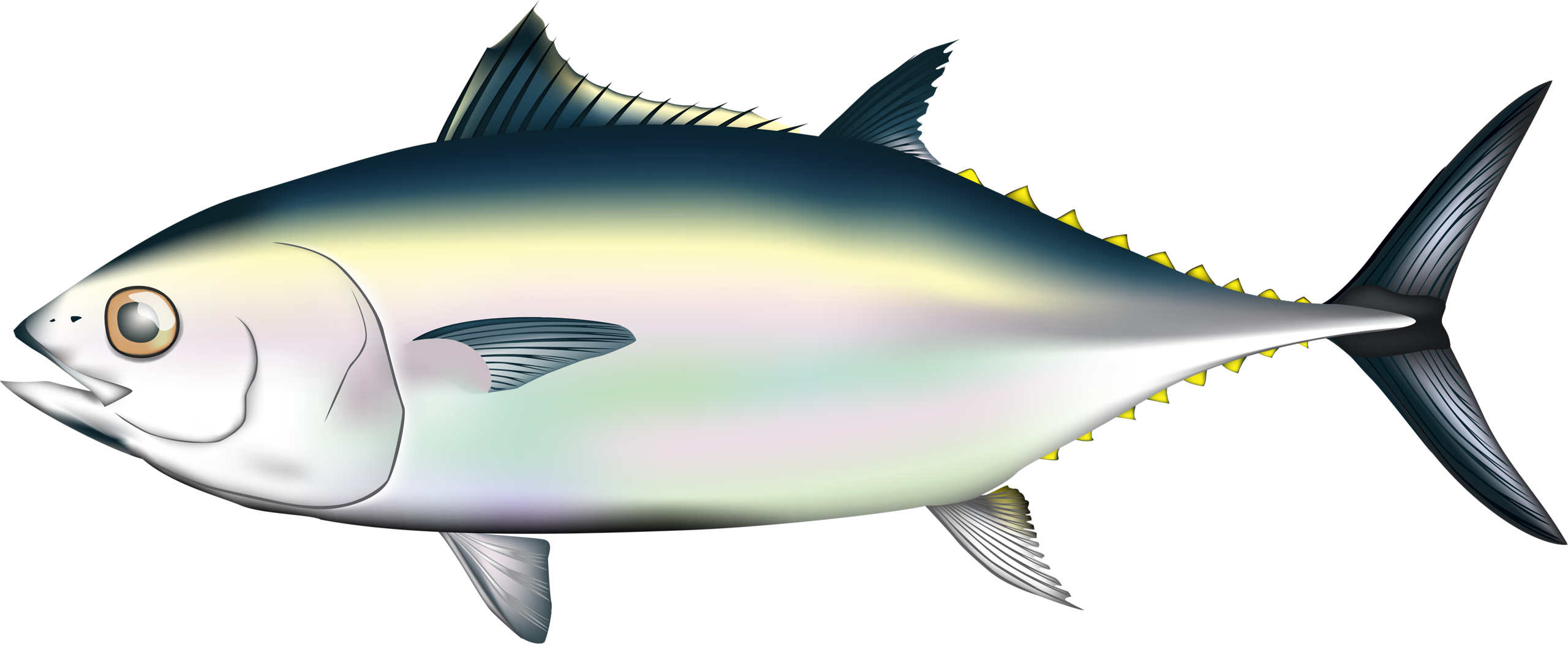 fish and sea. Tuna clipart happy
