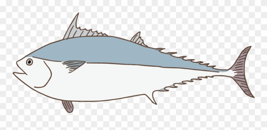 Kawakawa illustration . Tuna clipart mackerel fish