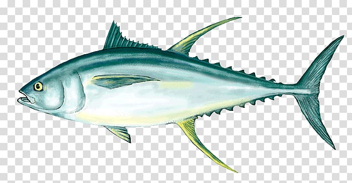 Tuna clipart mackerel fish. Yellowfin fishing as food