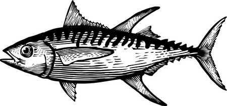 Tuna clipart outline. Free cartoon fish download