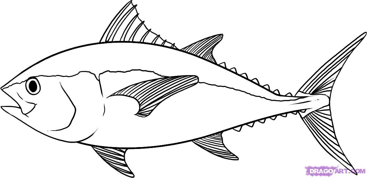 Tuna clipart outline. Pin on variety busy