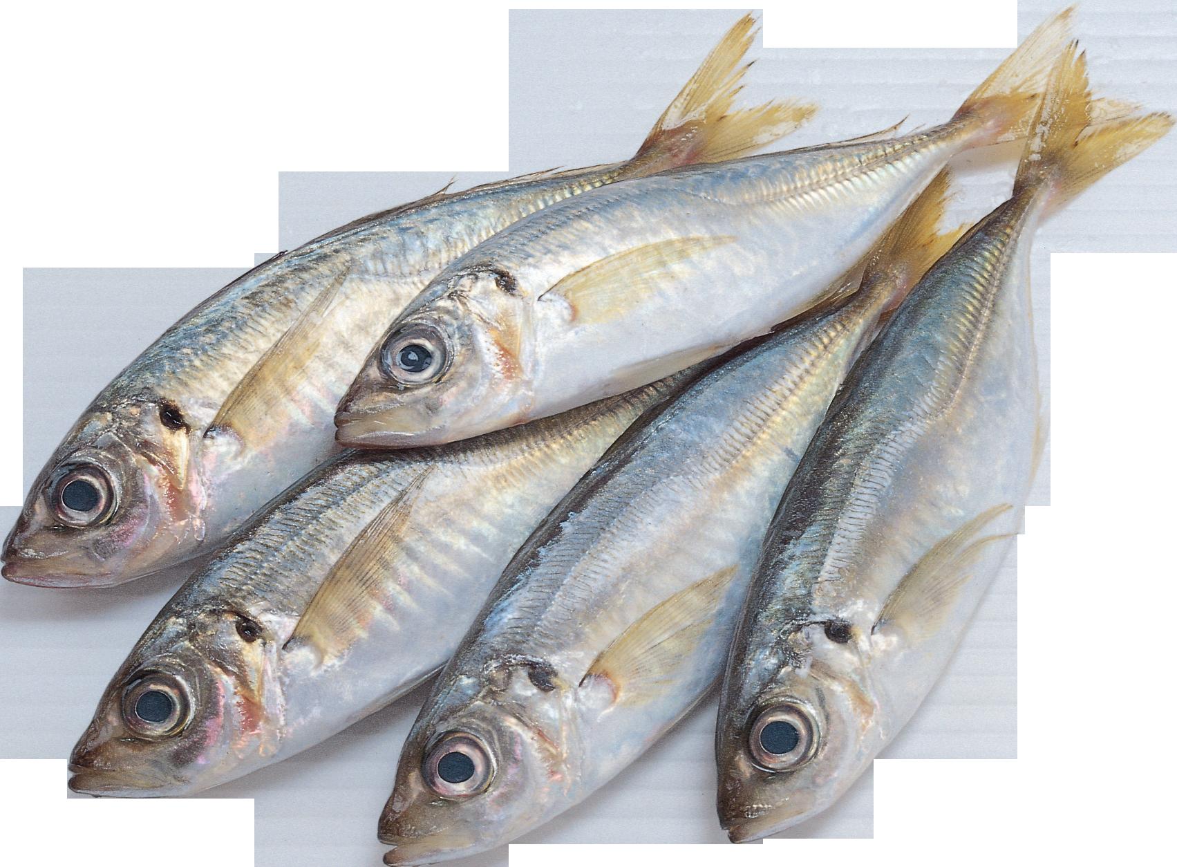 Tuna clipart sardine fish. Png