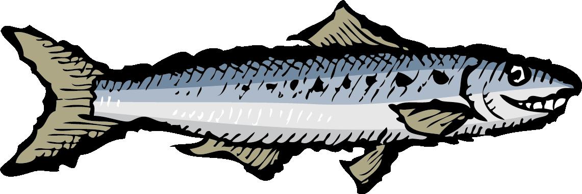 Portuguese sardines zingerman s. Tuna clipart sardine fish