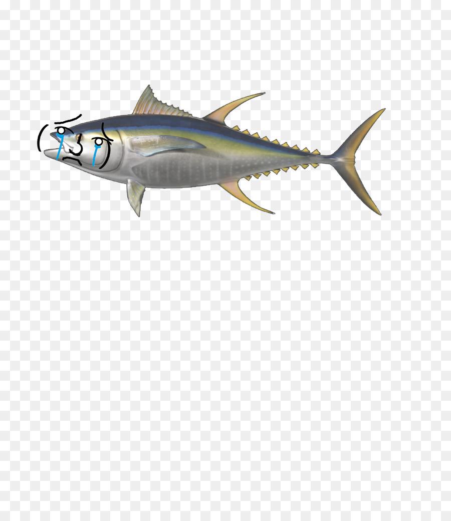 Shark fin background fishing. Tuna clipart sardine fish