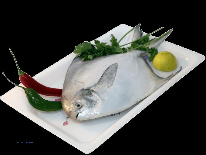 Fish homes. Tuna clipart sea foods