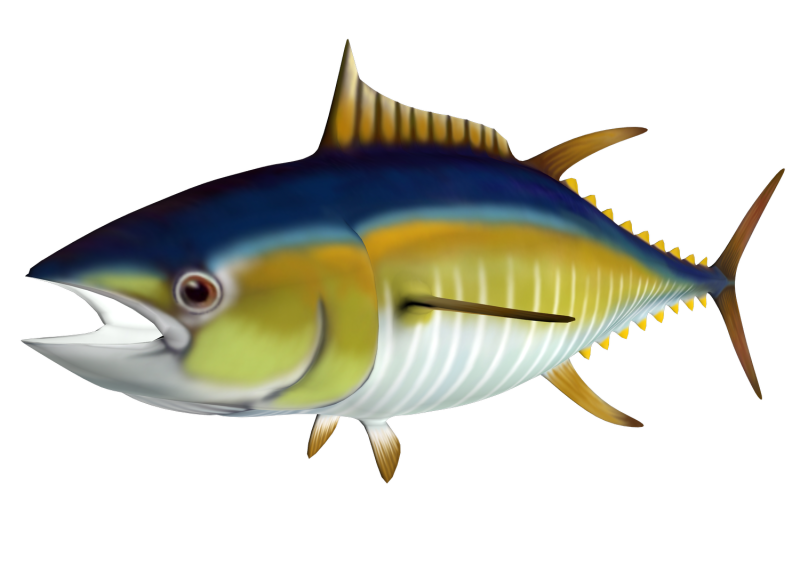 Tuna clipart transparent background. Ourclipart png pluspng free