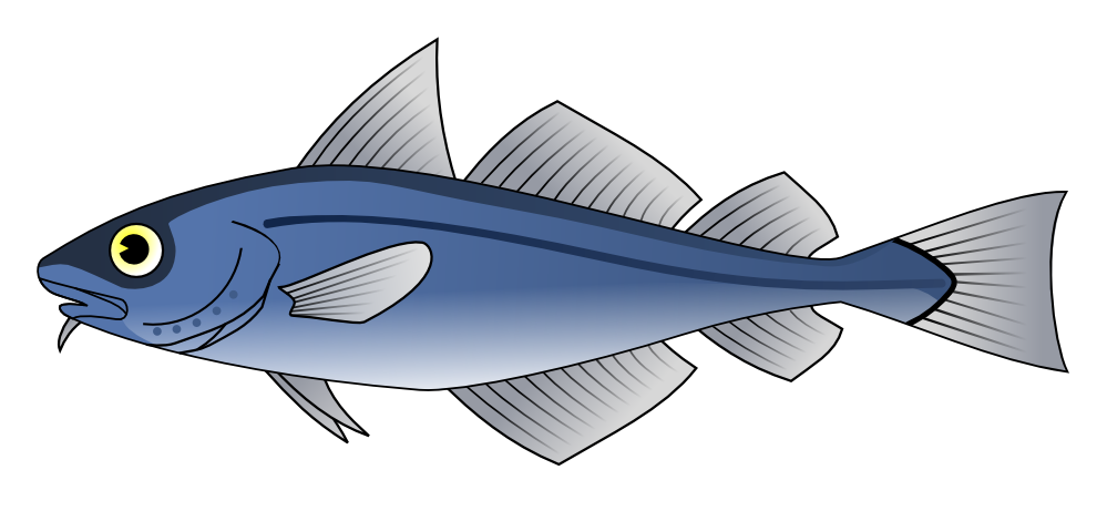 Clipartist net wikimedia codfish. Tuna clipart transparent background