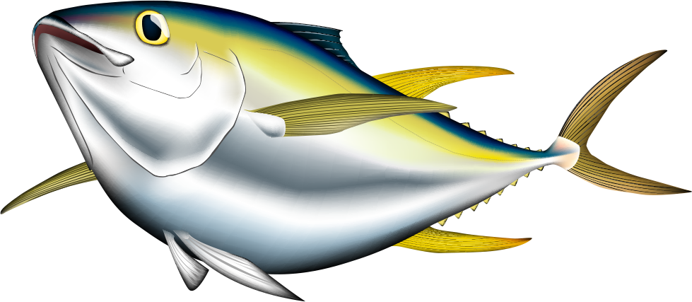 Tuna clipart yellowfin tuna. Bigeye albacore pacific bluefin