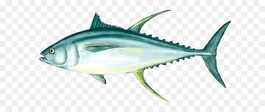 Shark fin background png. Tuna clipart yellowfin tuna