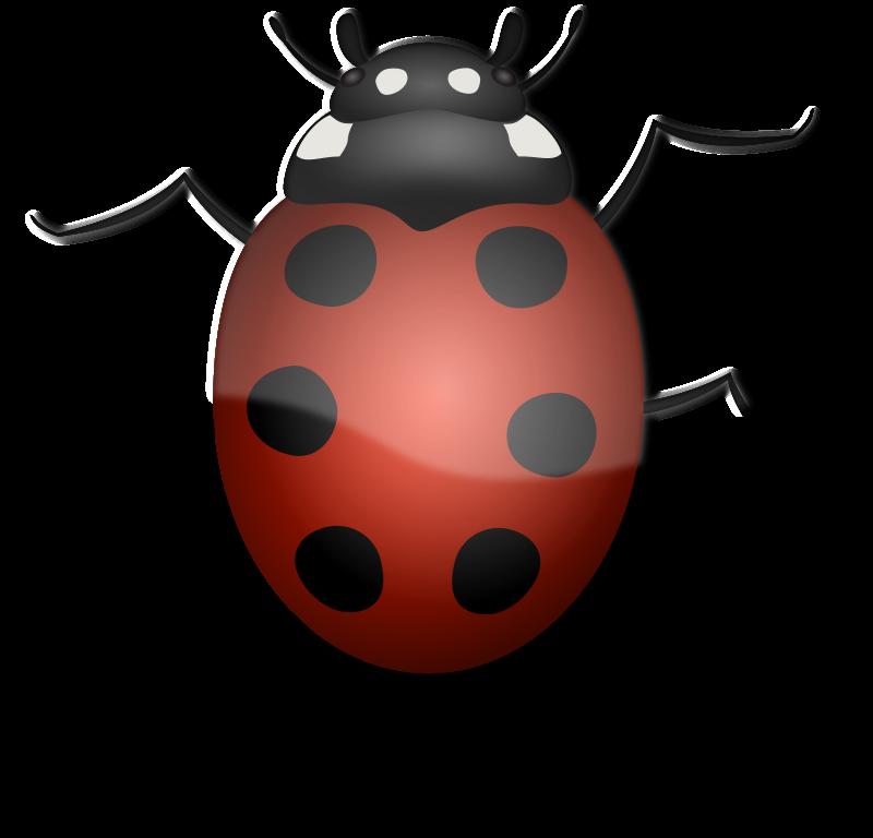 Valentine clipart ladybug. Bugs popular frames illustrations