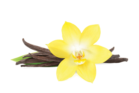 Vanilla flower png. Beautiful flowers bean various