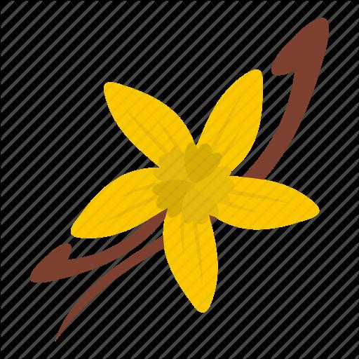Vanilla flower png. Spice by ivan ryabokon
