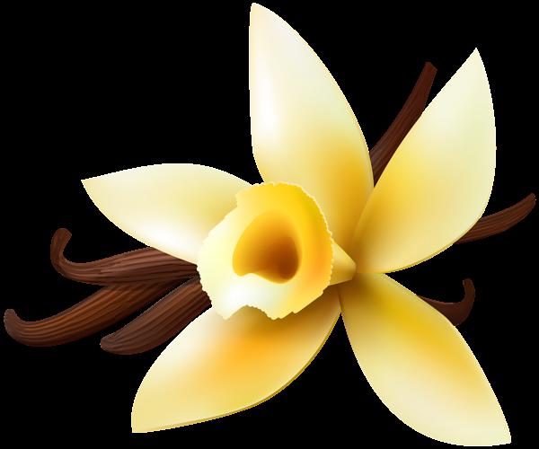 Vanilla flower png. Transparent clip art image