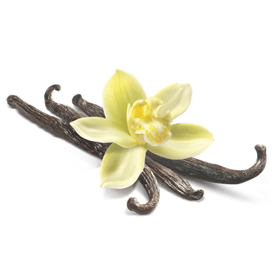 Transparent stickpng closeup. Vanilla flower png