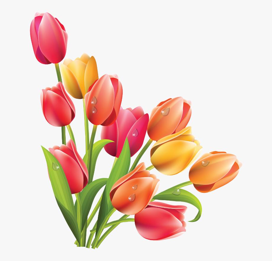 Vase clipart tulip png. Flower transparent background tulips