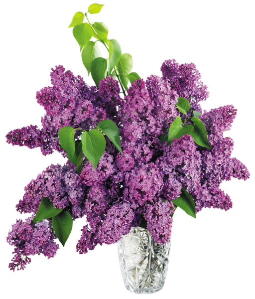 Vase clipart violet. Gallery free pictures
