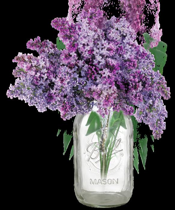 Vase clipart violet. Common lilac lavender clip