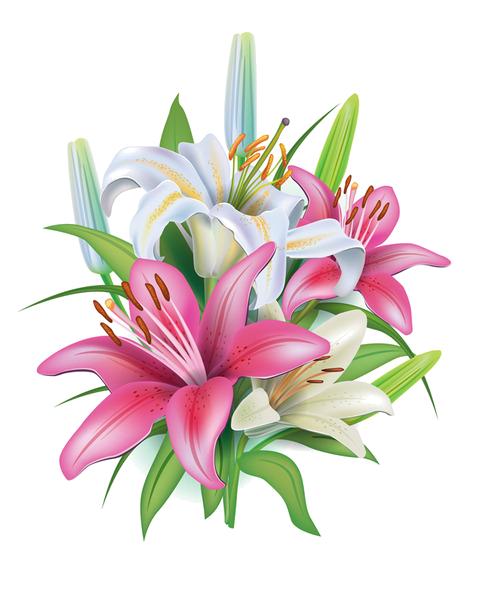 Vector flowers png. Fleurs flores bloemen kwiaty