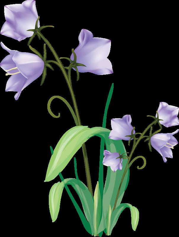 Gentian jar and flower. Vector flowers png