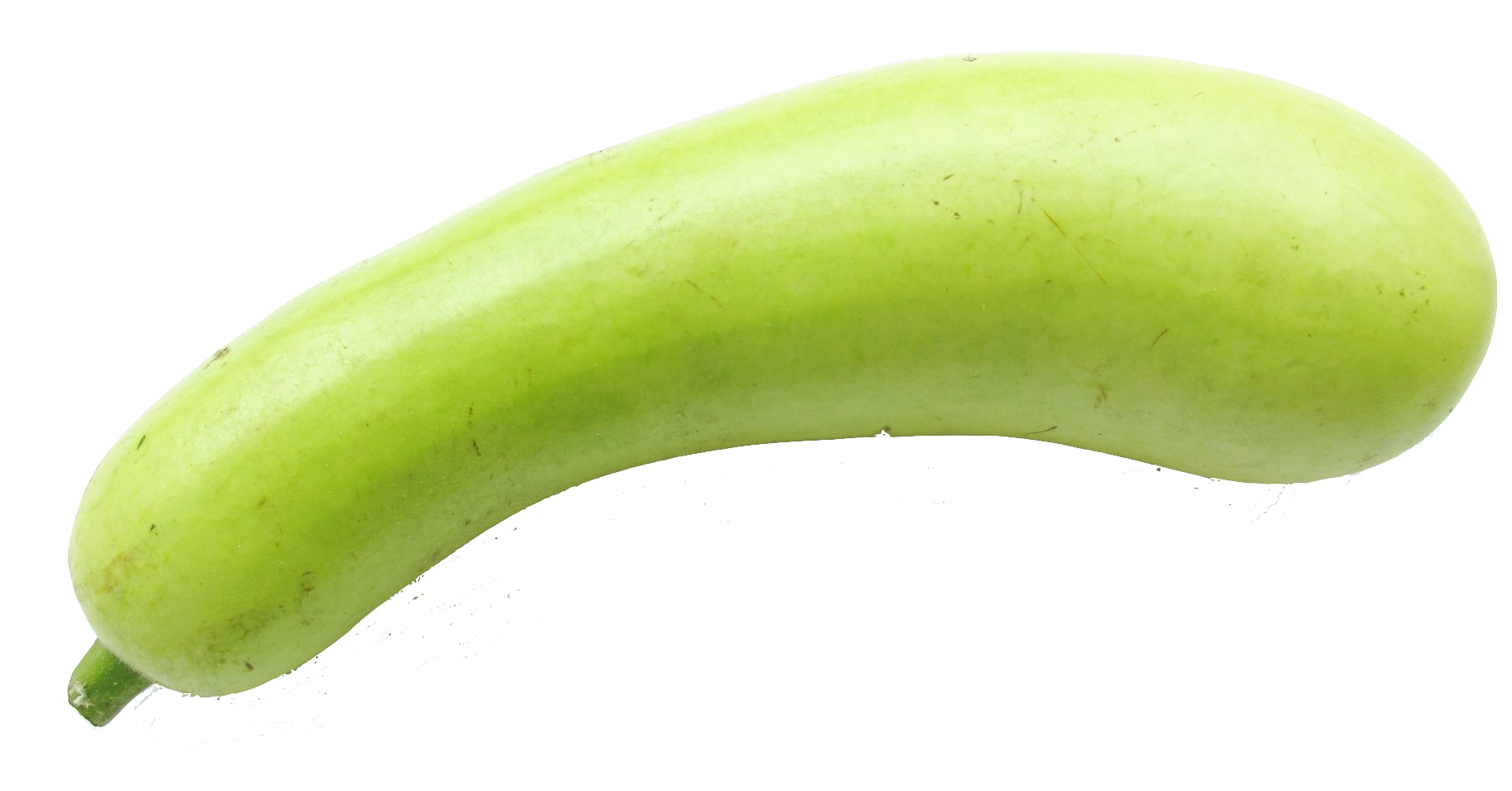 Vegetables clipart bottle gourd. Word duniya guard