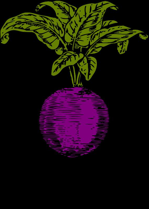 Vegetables clipart turnip. Purple beet medium image