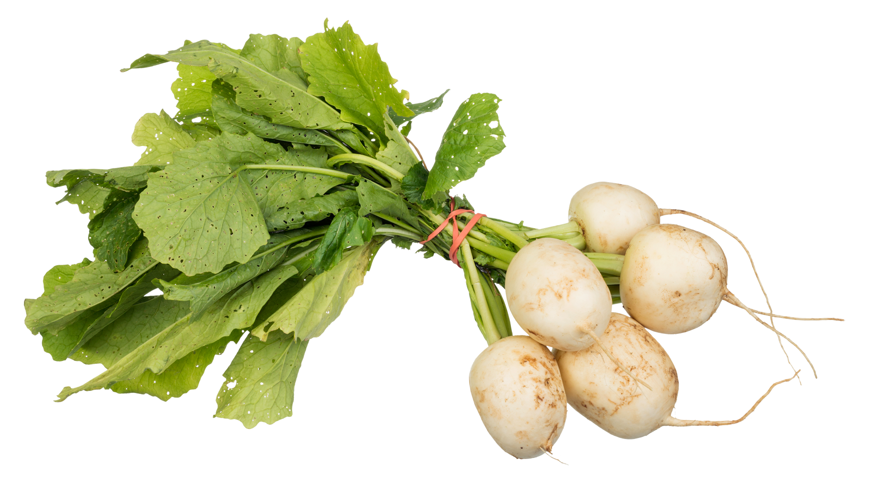 Turnips png image purepng. Vegetables clipart turnip