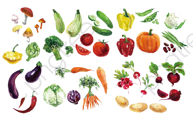 Vegetables clipart watercolor.